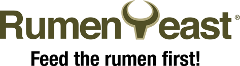 Rumen Yeast Feed the rumen first
